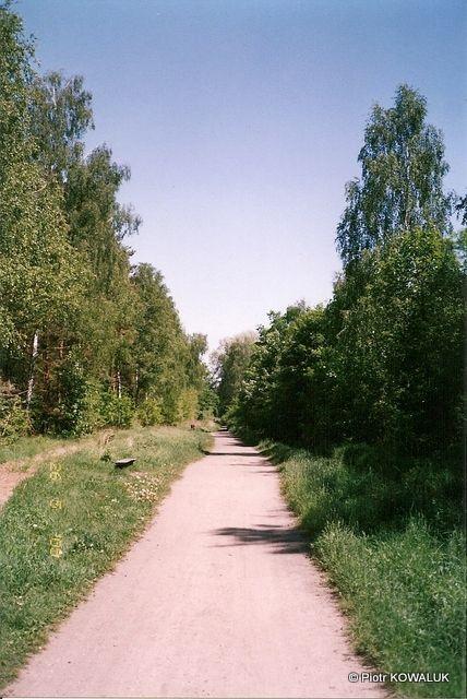 Leśna droga wzdłuż anteny Transatlantyckiej Stacji Nadawczej.